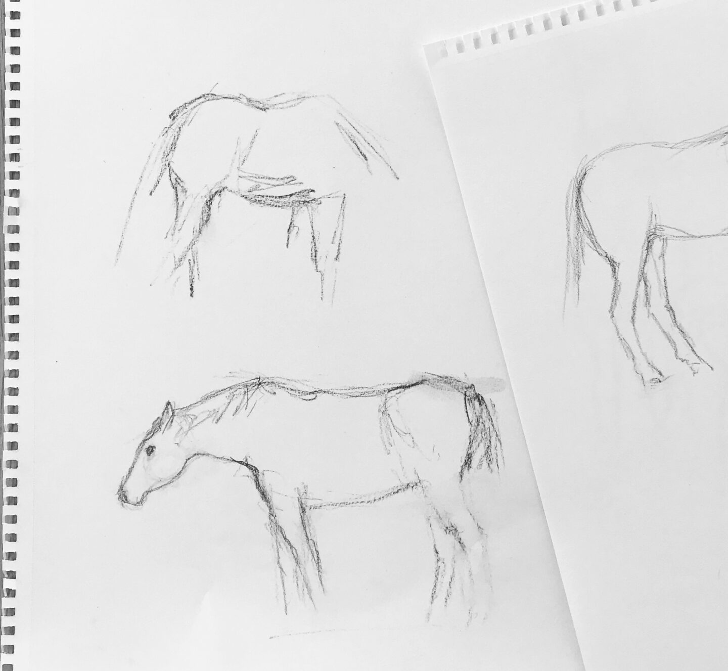 Horse sketches in pencil.