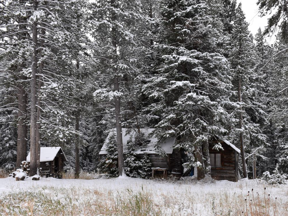 Cabins in Cooke City, Montana near wolf watching in Yellowstone